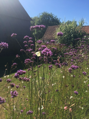 Verbena at Ulting Wick